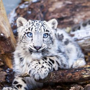 Calendrier Baby Animals 2020 Janvier