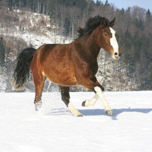 Calendrier Horses 2020 janvier