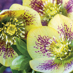 Calendrier Flowers 2020 Janvier