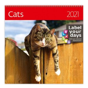 Calendrier mural Cats 30x30 2021