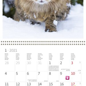 Calendrier mural Cats 30x30 2021 Janvier