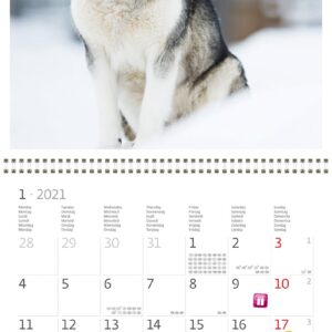 Calendrier mural 30x30 Dogs 2021 Janvier