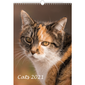 Calendrier mural Cats 2021